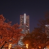 夜桜見物 in Yokohama