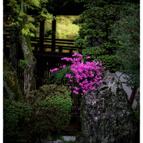 小江戸川越散歩13