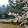 ラウンド前の桜の一時
