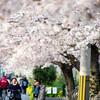 街と人と桜と