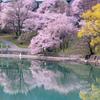 高遠ダムの春