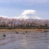 桜の園と笠雲2