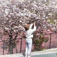 平成最後を咲いた桜達~ⅲ