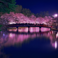 桜前線追っかけ旅行2019