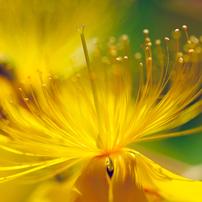 花(バラ以外)