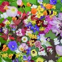 春の花の色いろいろ