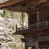 霊松寺・山門の桜