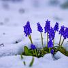 春の雪に埋もれて