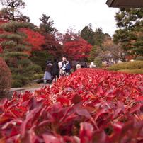 紅葉の垣根