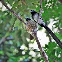 かわいい小鳥 2