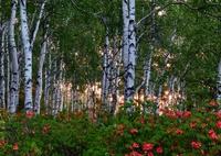 初夏 夜明けの高原