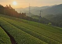 茶源郷の朝Ⅱ ~朝陽~