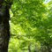 森の緑と幹の癒し