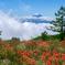 雲上の花Ⅱ