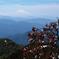 ミネザクラと鳥海山
