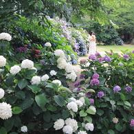 紫陽花の園のマリア