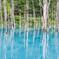 夏の日、青い池で。