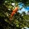 深淵を泳ぐ緋鯉