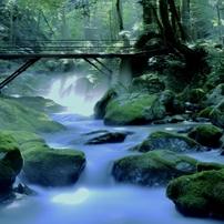 渓流の芹川