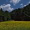 京都花背の里のルドベキア1
