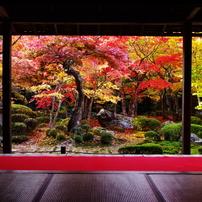 2010京都紅葉情報