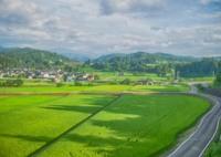 夏の記憶 緑の田園