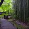 青紅葉と竹林