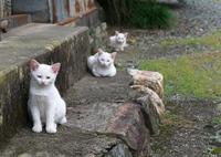 白猫進化論