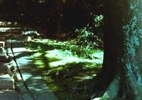 「散歩カメラ 95」 OLY PEN-F (film)