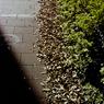 落ち葉の影