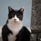 真鍋島の猫たち9