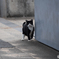 真鍋島の猫たち10