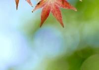 秋色を捜して