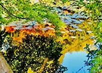 秋色を映す池