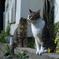cat_437 見つめる