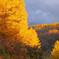 煌めきの秋