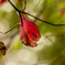 Leaf 16 秋色に染まる #2
