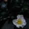 寺庭の秋花…4