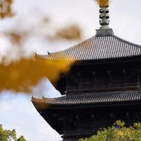 東寺の五重塔です。