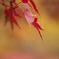 紅葉の季節(3)