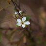 季節外れの開花 DSC_8257