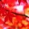 よりそって揺れる秋