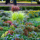 秋・公園の花壇