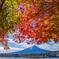 色彩の湖畔