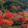 紅葉の多宝塔