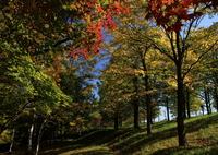 秋の日差し 10月