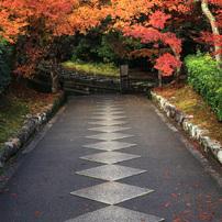 京都・紅葉 -1