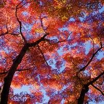 彩時 晩秋から初冬へ