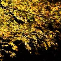 晩秋の午後