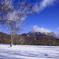 初冬の牧場